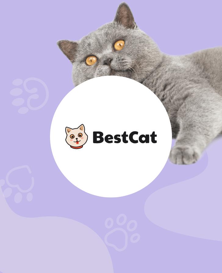 BestCat.com