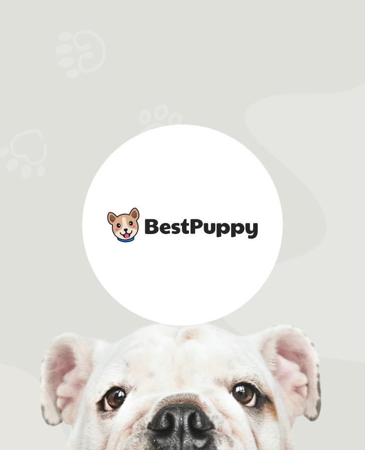 BestPuppy.com